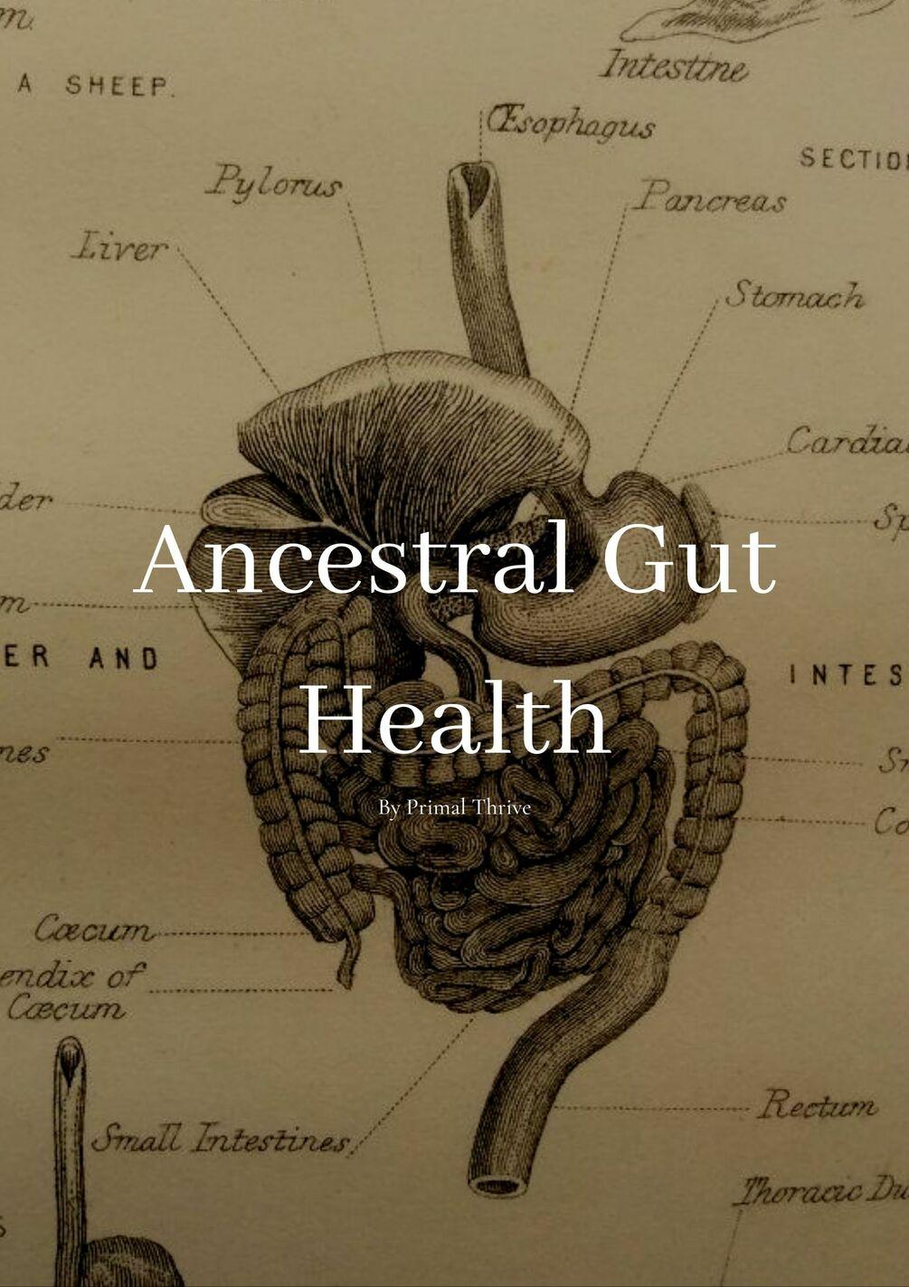 PrimalThrive – Ancestral Gut Health