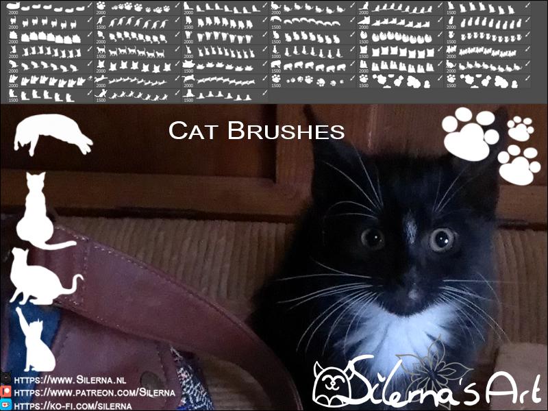 Samsam's Cat Poses
